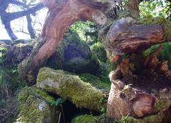 Wistmans Wood - Sanctity in Nature -